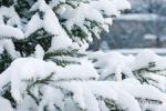 arboles nevados
